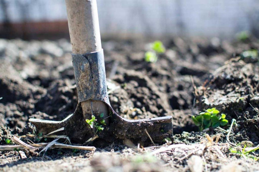 Tilling Soil to Plant a Garden